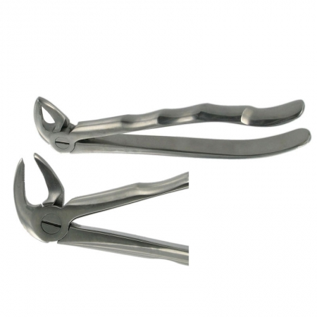 ENGLISH FORCEPS 33 LOWER ROOT