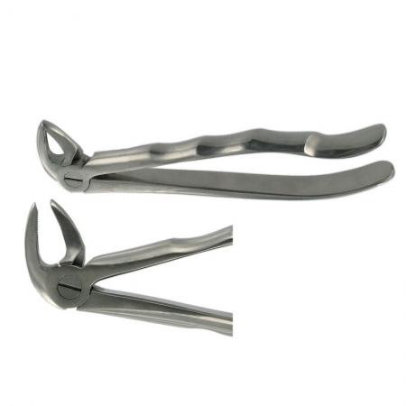 ENGLISH FORCEPS 33M LOWER ROOT